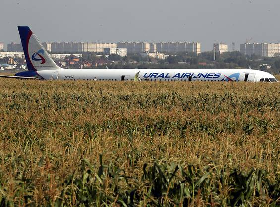 Das russische Passagierflugzeug mit mehr als 230 Menschen an Bord ist nach einer Kollision mit Vögeln in der Nähe von Moskau in einem Maisfeld gelandet.