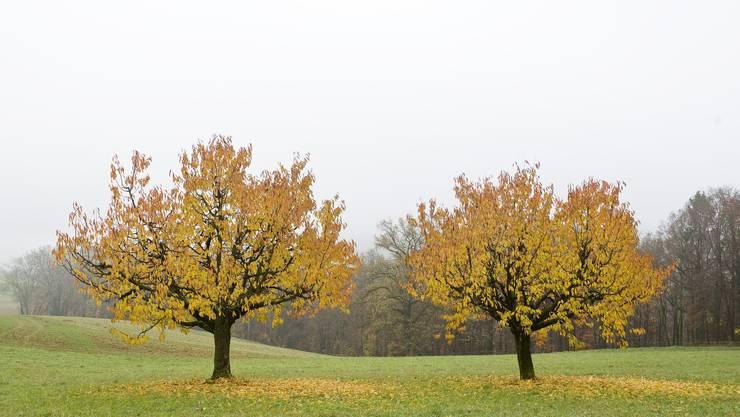 Treibjagd in Wittnau