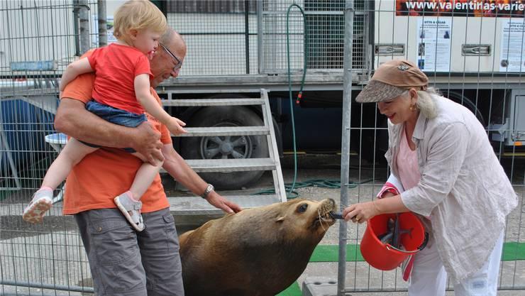 Die Seelöwen Otto und Cäsar lebten mit Besitzerin Valentina Pellanda in Wittnau. Sie freuten sch stets über Besuch.