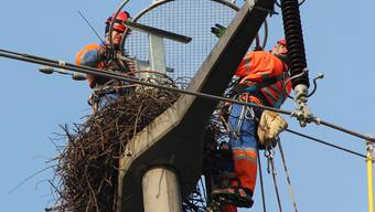 AEW versetzt Storchennest in Rottenschwil
