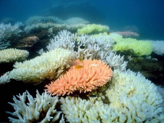 Das Reef ist bekannt für seine Korallen