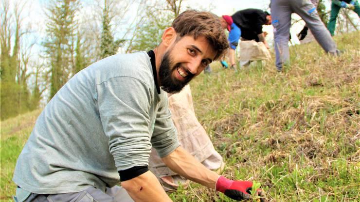 Einsatzleiter Diego Scholer vom Naturwerk Windisch zeigt den Zivis, wie sie das noch junge Berufkraut erkennen und ausstechen müssen. Andrea Weibel