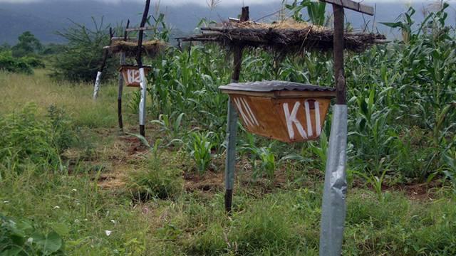 Kenianische Bauern schützen ihre Felder mit Bienenstöcken vor Elefanten (Archiv)