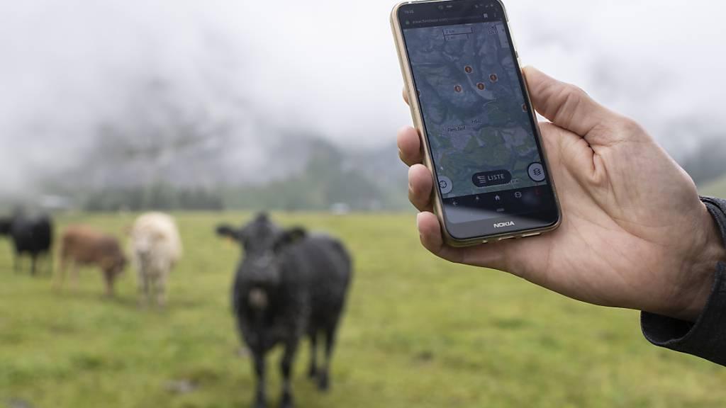 Besenderte Tiere in Graubünden sollen Outdoorsport sicherer machen