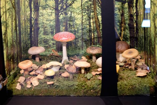 Eine Auswahl an Pilzen