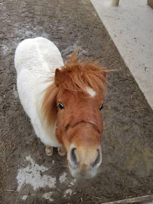 "Archie ist das neue ""Roggi""-Pony"