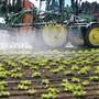 Die vom Bundesrat eingesetzte Beratende Kommission für Landwirtschaft wünscht sich eine offene Debatte zur zukünftigen Landwirtschaft.