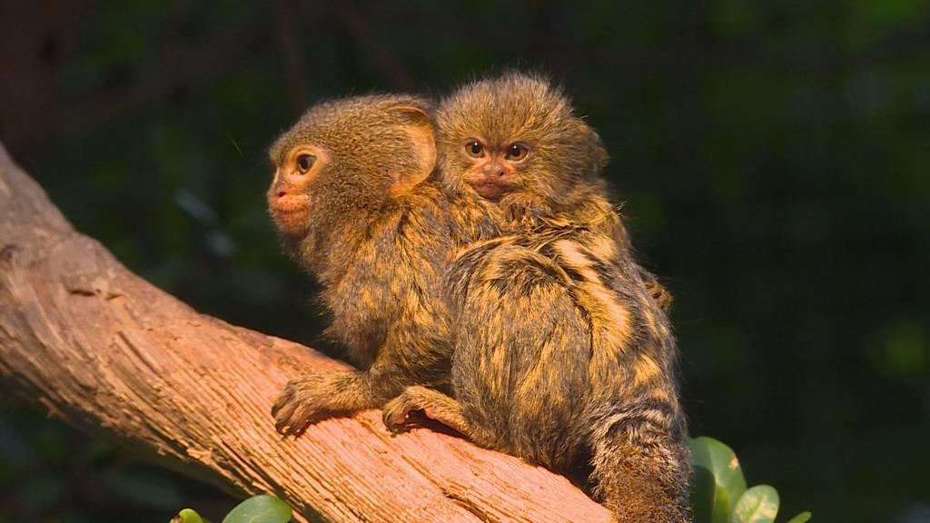 Reptilien, Affen und andere tierische Arbeitskollegen