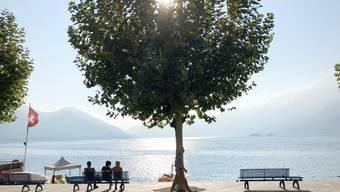 Diesen Frühling boten oft nur Bäume Schutz vor der Sonne.