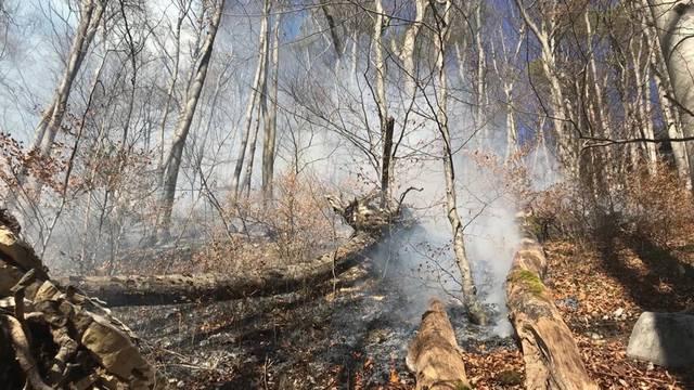 Mehrere Waldbrände im Februar