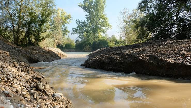 Hier fliesst der neue Nebenfluss in die Limmat. Bis gestern Vormittag war hier noch ein Kiesdamm dem Wasser im Weg gestanden.