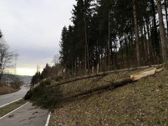Umgestürzte Bäume: Zwischen Wohlen und Bremgarten ist der Radweg geschlossen.