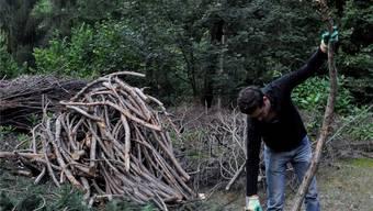 Im Zwischenlager Bruderholz wurden die Äste des Mammutbaums für die Weiterverarbeitung gesäubert.