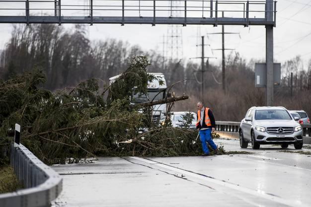 Ein durch den Sturm Burglind umgestürzter Baum blockiert die Durchfahrt auf der Autobahn A1 Fahrtrichtung Bern auf Höhe Wangen an der Aare.