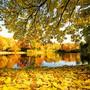 Der goldene Herbst kommt früher als gedacht.
