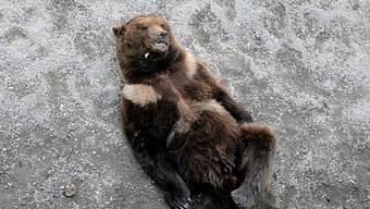 Bär wird von oben betrachtet (Archiv)