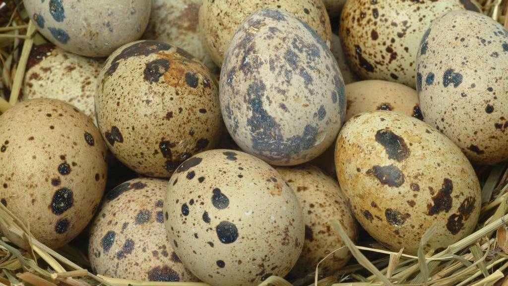 Bewusst den Konsumenten getäuscht: Viele Eier sind aus Käfighaltung (Symbolbild).