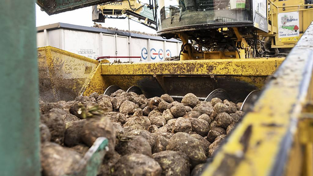Altholzkraftwerk verbessert CO2-Bilanz der Zuckerfabrik Aarberg