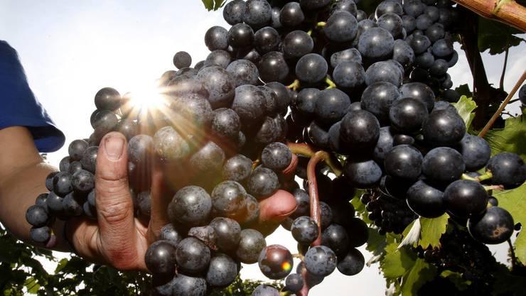 Naturwein wird nichts weggenommen und nichts hinzugefügt. (Symbolbild)