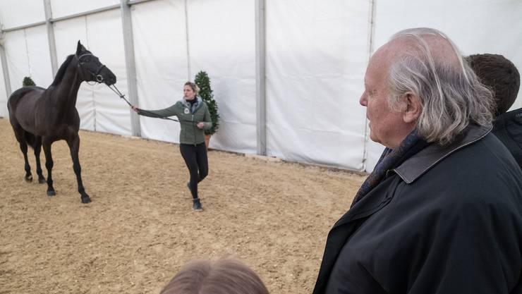 Beine im Blick: Tierarzt Markus Müller kontrolliert, ob das Pferd körperlich gesund ist, damit es am CSI starten kann.