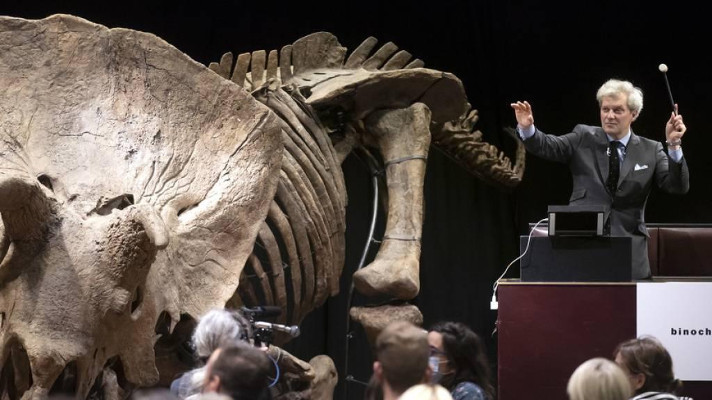 Triceratops «Big John» für 6,6 Millionen Euro an versteigert