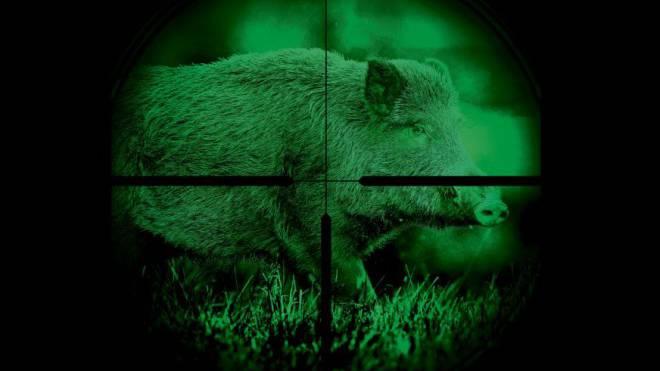 Baselland hat Nachtzielgeräte für den Abschuss von Wildschweinen gekauft. Grafik: Marco Tancredi