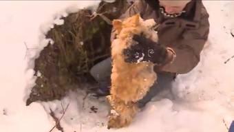 Das Ehepaar Dobler fand ihre Katze tot im Wald – erschossen von einem Jäger. Muss dieser dafür büssen?