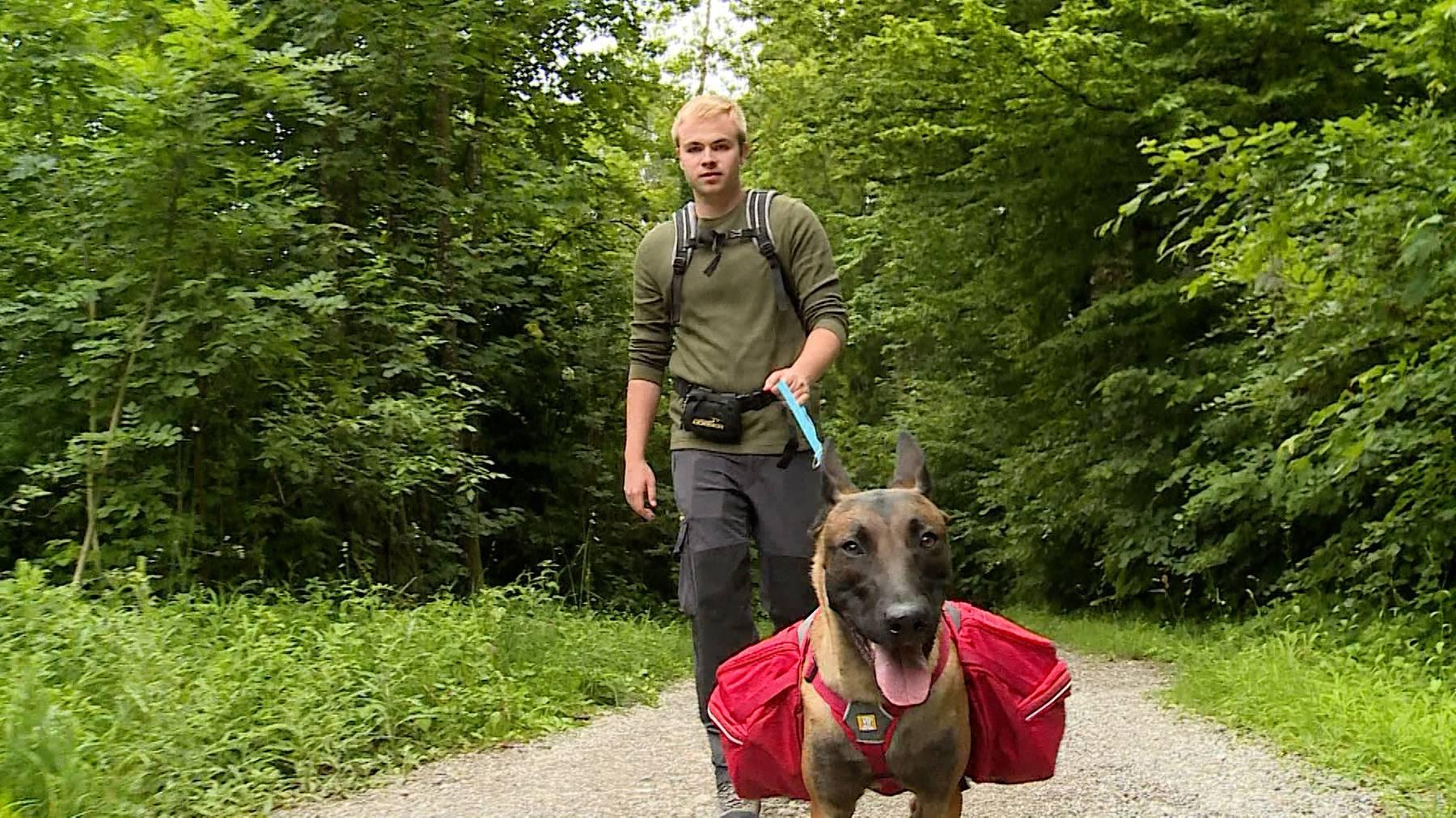 Rucksack-für-Hunde