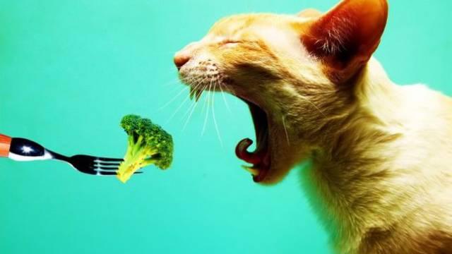 Fleischverzehr schade der Umwelt – auch der von Tieren. Foto: ho