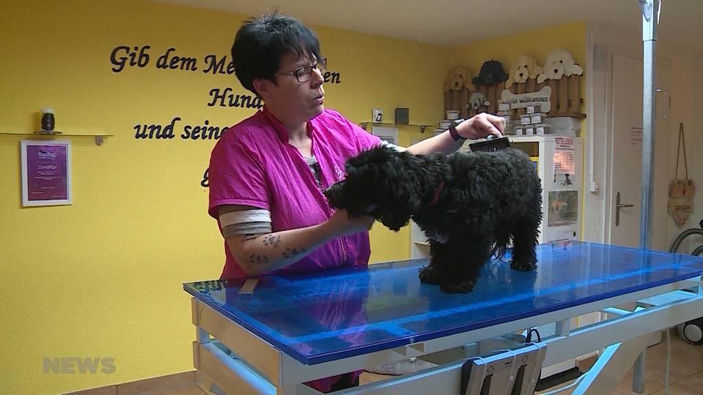 Winterfell im Frühling: Tiere leiden unter geschlossenen Hundesalons