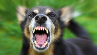Gegen den aufgebrachten Mischlingshund hatte der Mann am Waldrand keine Chance (Symbolbild). iStockphoto/Getty