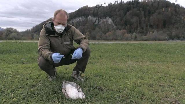 Wegen Vogelgrippe: Wildhüter auf dem Kontrollrundgang