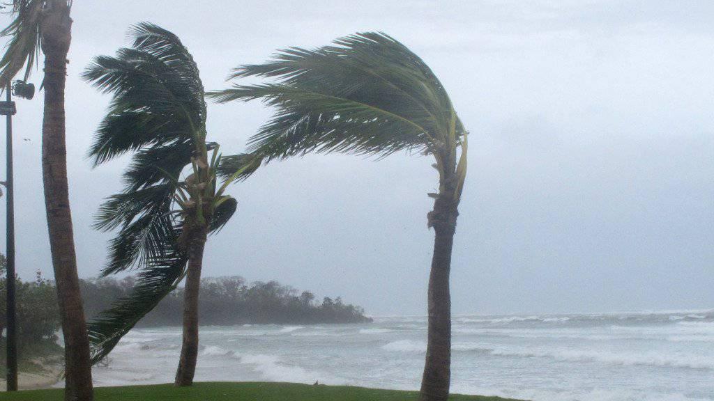 Vom Sturm gepeitschte Palmen während eines früheren Sturms auf den Fidschi-Inseln (Archiv)