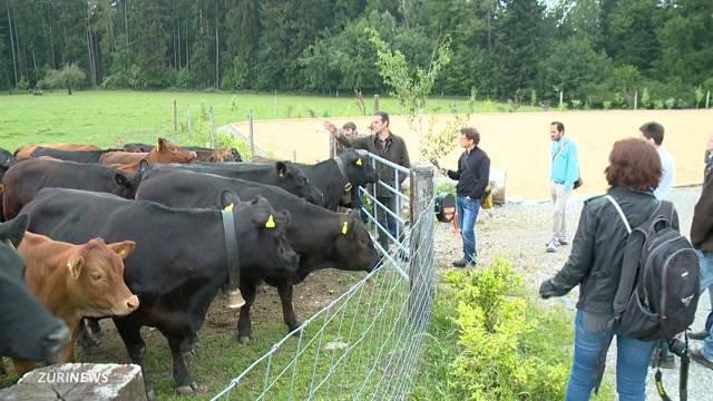 Weidschlachten - Biobauer geht neue Wege