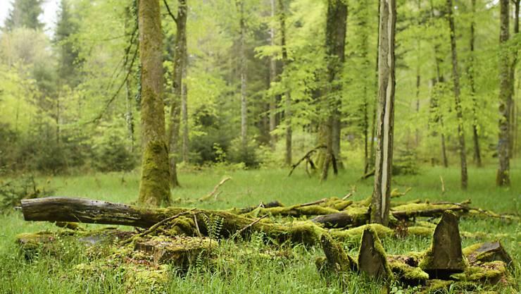 Der Bundesrat spricht zusätzliche Gelder für die Förderung der Biodiversität. Geplant sind unter anderem Waldreservate.