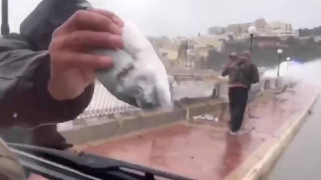 Malta: Fische fallen vom Himmel