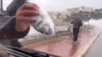 Von der Strasse lesen statt aus dem Meer holen: Fischfang der anderen Art auf Malta.