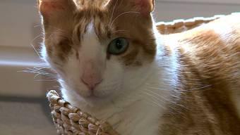 Vom Tierheim ins Katzenparadies: Kater Rami in seinem neuen Zuhause.