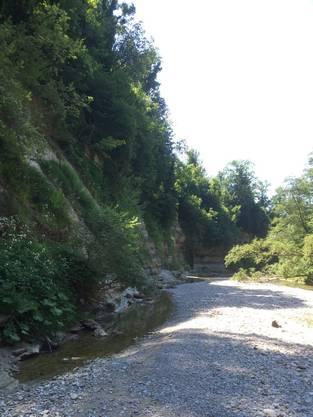 Diesen steilen Hang fiel das Kalb hinab in den Fluss Necker.
