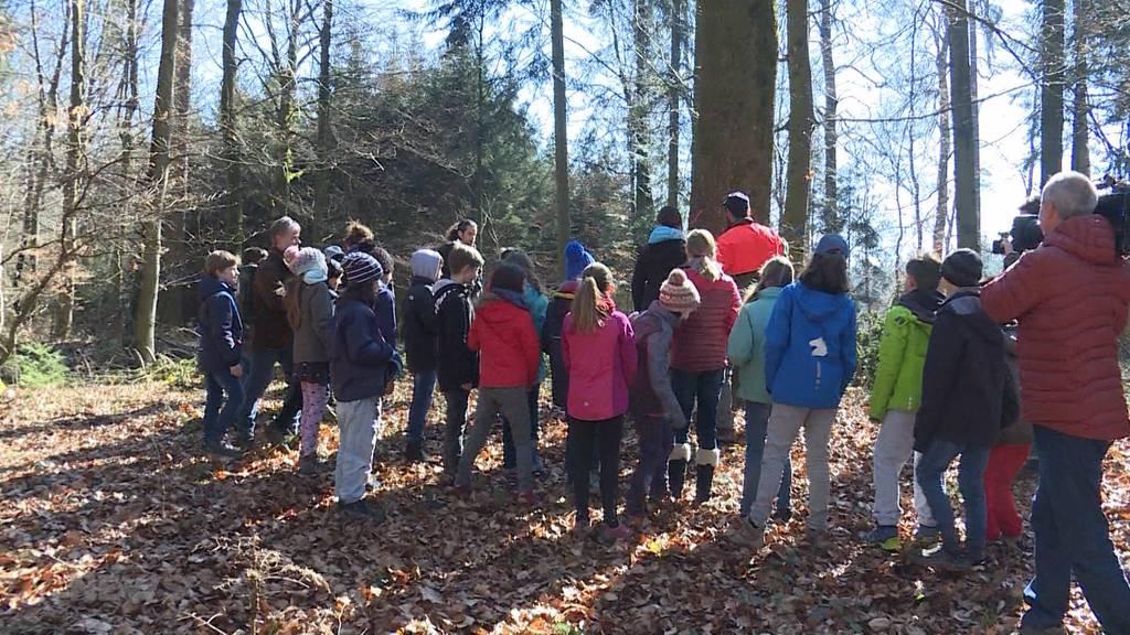 """Schulklasse wurde zum """"Tag des Waldes"""" draussen unterrichtet"""