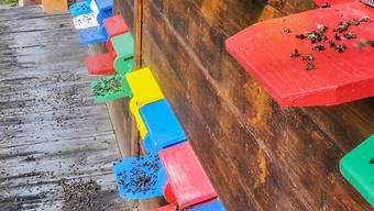 Massensterben im Bienenstock: Der Bienengesundheitsdienst stellt vermehrt Pestizid-Mehrfachbelastungen als Todesursache von Bienen fest.