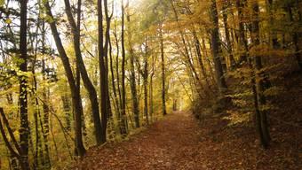 Der Kanton soll nicht für den Wald zahlen. Das Aargauer Stimmvolk hat die Initiative deutlich verworfen.