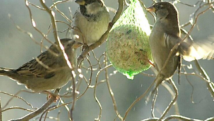 Schweizer Gärten bieten vielen Vögeln einen Lebensraum. Je naturnaher der Garten, desto mehr Vogelarten fühlen sich darin wohl. (Symbolbild)