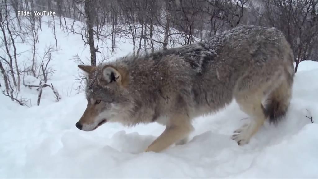 Nationalrat diskutiert über Jagdgesetz