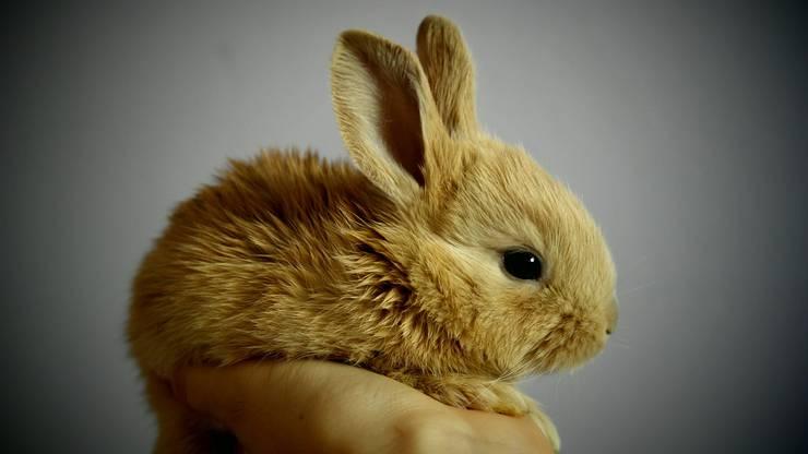 Ein Kaninchen mit dem einfallsreichen Namen Bugs Bunny ist leider auch allein im Hotelzimmer zurückgelassen worden.