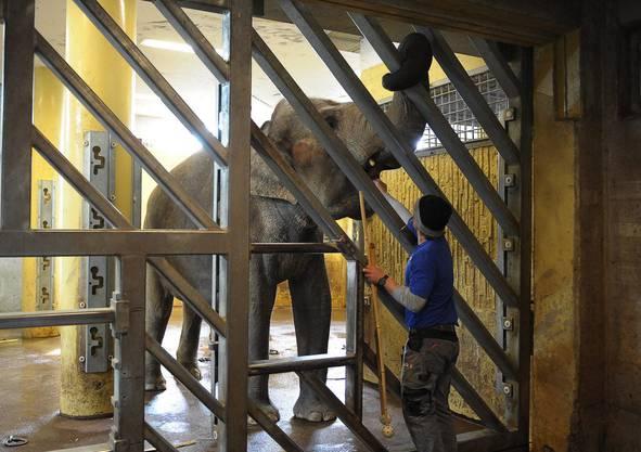 Der neue Elefantenpark wird 2014 eröffnet.
