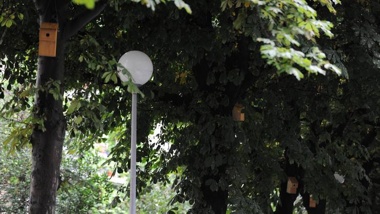 Insgesanmt 230 alte Bäume werden von der Stadtgärtnerei mit Jungbäumen ersetzt.