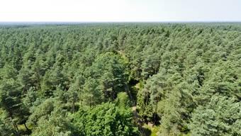 Der britische Wald bleibt vorerst in Staatsbesitz (Symbolbild)