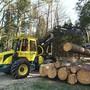 Bleiben frisch geschlagene Nadelholzstämme im Wald liegen, werden sie rasch zum Opfer von Borkenkäfern.