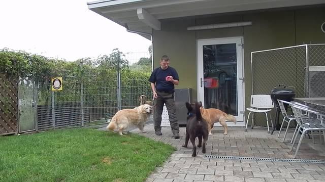 Ivan Schmid spielt mit seinen Gästen im Tierhehim Aarebrüggli